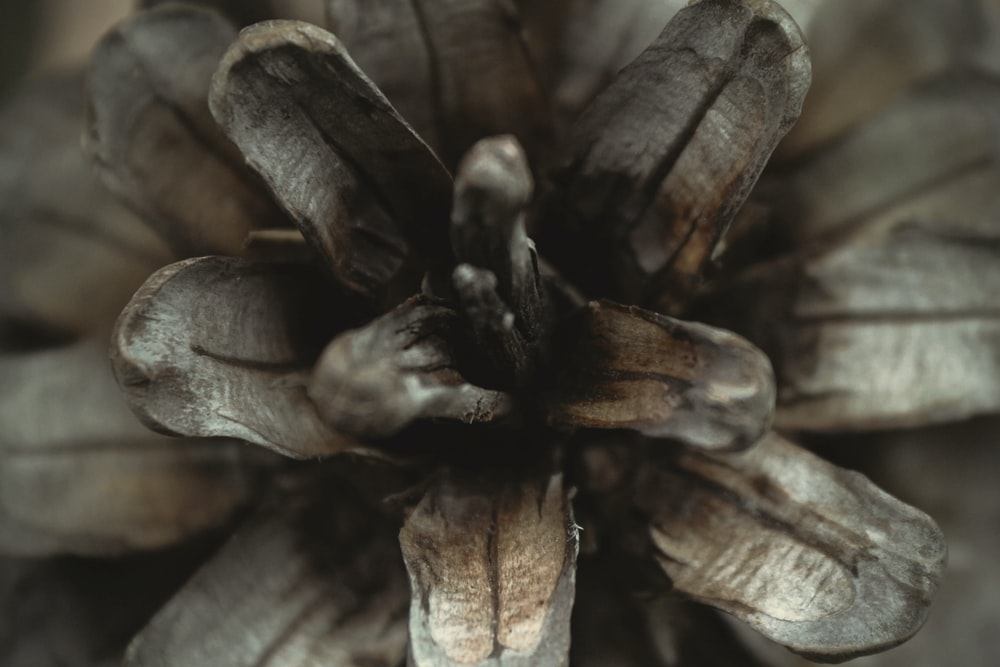 close-up photography of grey plant