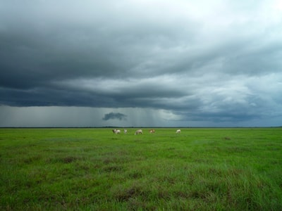 animals on green field under cloudy sky venezuela zoom background