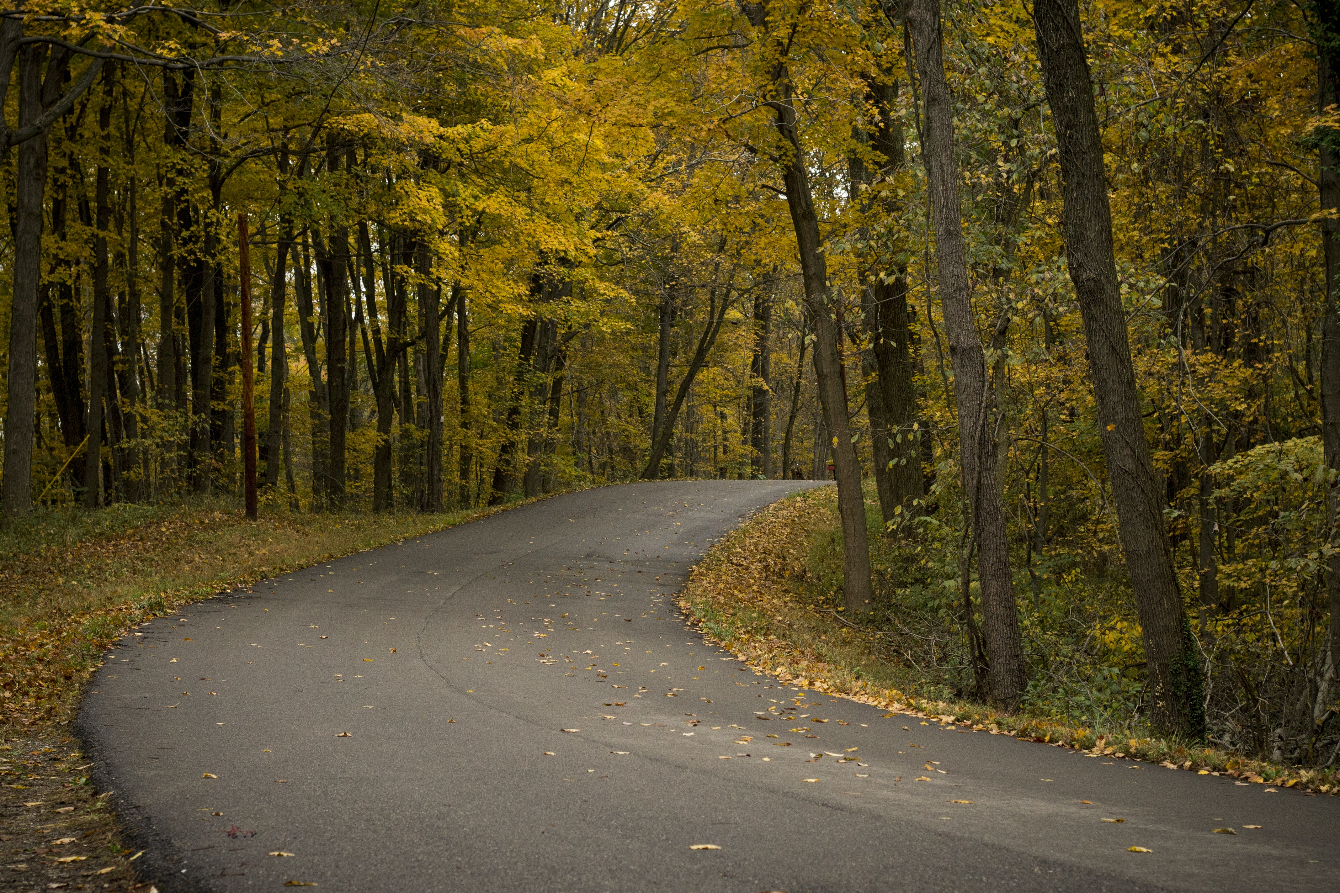 gray concrete road surrounded by trees